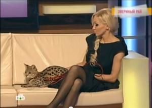 Savannah cat and beautiful owner in pantyhose
